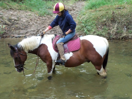 Buddy, who is now fully retired due to feet issues, used to enjoy a trail ride from time to time. He seemed to like the attention and change of scenery. He was an event horse for many years, so to go to that to doing nothing is a shock i'm sure