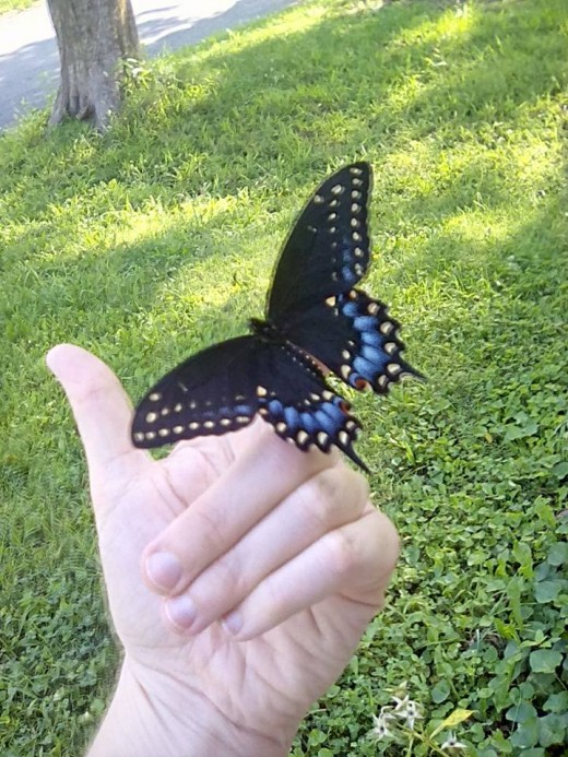 The most marvelous and beautiful butterflies live in Costa Rica! If you are fan of unique insects, this is a treasure trove! Plus, NO mosquitos!!