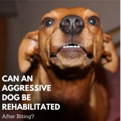 Can an Aggressive Dog Be Rehabilitated After Biting?