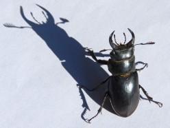 Bug Identification Guide