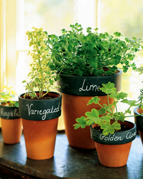 Chalkboard plant pots are great for herbs or flower seedlings.