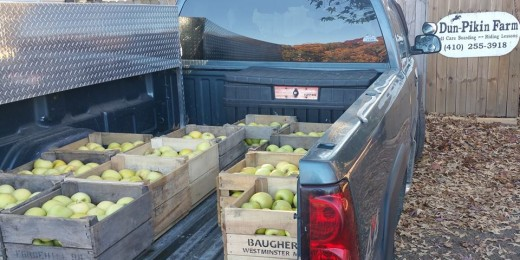 These are the things horses dreams are made of, truck beds filled with apples!