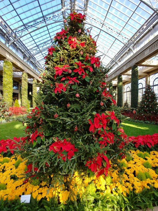 One of the many trees inside the Conservatory at Longwood Gardens.  Every display uses natural flowers and plants.