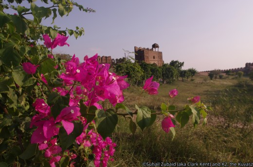 Blooms at a historic fort.