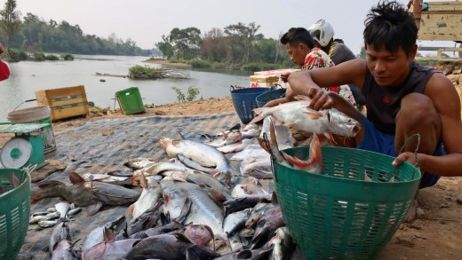 Construction of dams in Laos is threatening the livelihood of fishermen, like these shown in the southern Mekong region of Champasak.
