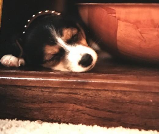 Wendell the puppy