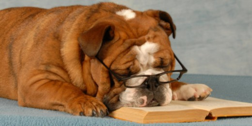 Knowing dog psychology helps to understand its activities more