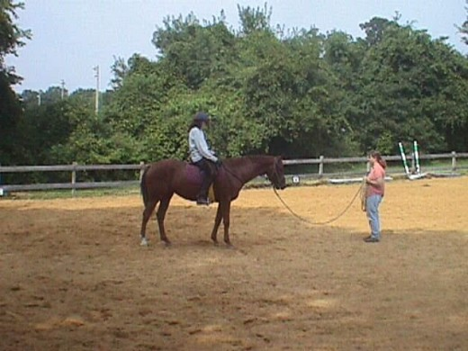If you are an assertive leader and can control your horse on the lunge line that can be a good option. If you aren't able to do so, you might make things worse.