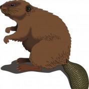 Tridos profile image
