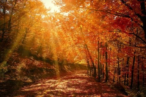 Uncertainty on Spiritual Path: A Poem