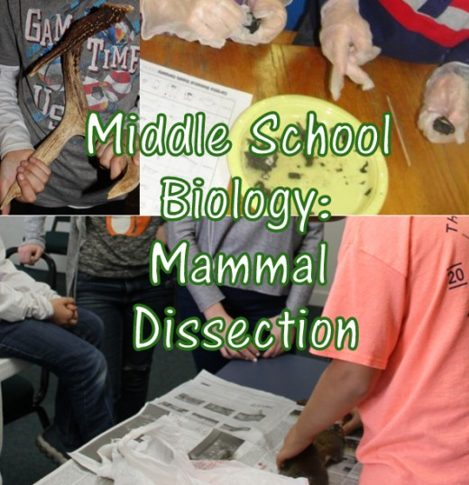 Christian Middle School Biology Lesson: Mammal Dissection