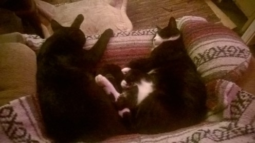 Extended treaty negotiations followed by lengthy naps were conducted.
