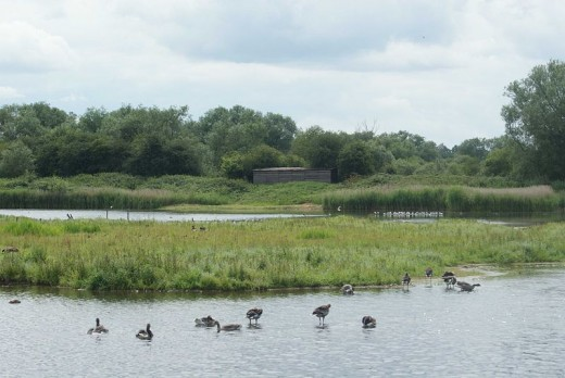 A photograph of the East Marsh on a beautiful summer's day.
