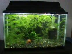 The Personalized Freshwater Aquarium