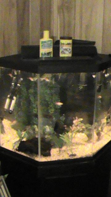44 Gallon Corner Tank