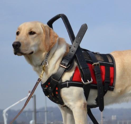 Pretty Service Dog