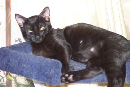 """Ebony, one of our two most recent """"foster-failures,"""" adopted in September 2018."""