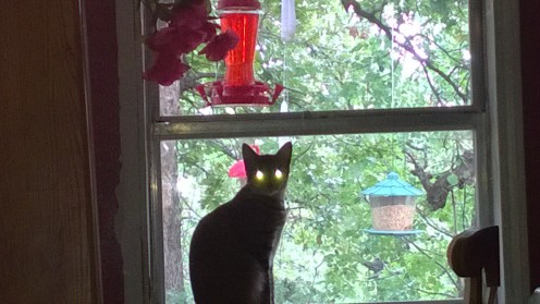 The cats complain about the new neighbor's cats eyes, but we shush them.