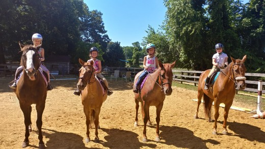 These lesson horses love playing follow the leader!