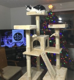 Great Cat Tower Deal