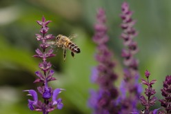 25 Great Honey Bee Questions With Answers