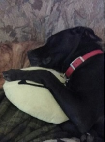 On his first birthday, still cuddling with his favorite pillow.