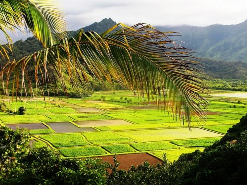 Agriculture is a major contributor to island economy.