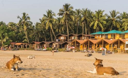Dogs on the Beach at Agonda