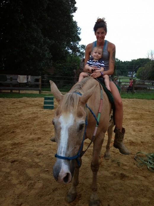 Family horse Cory