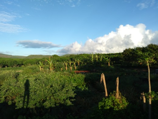 View of the very first farm I wwoofed at in Hawaii.