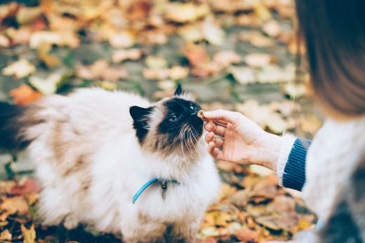 A pet-parent cares for her senior cat