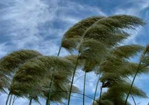 Wind blowing, we do not know its source