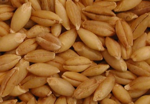 Barley, a fresh new note, is featured in A*Men Pure Malt.