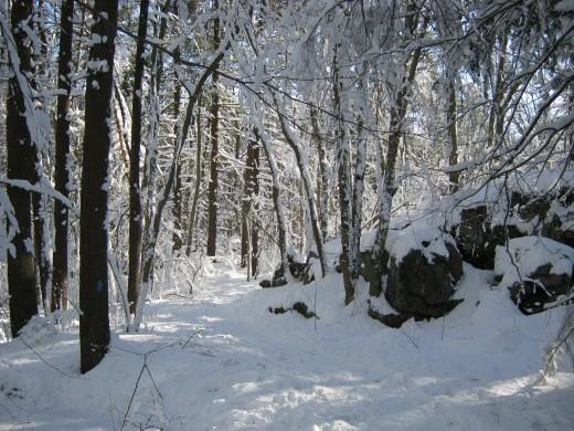 Wilson Mountain Reservation