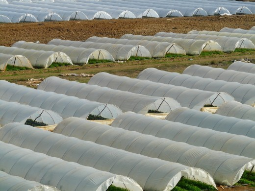 Greenhouse nursery or winter tunnel made of plastic