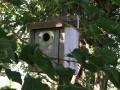 Enhance Habitat for Wrens in the Landscape