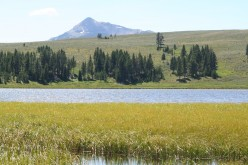 A Great Vacation: Yellowstone National Park