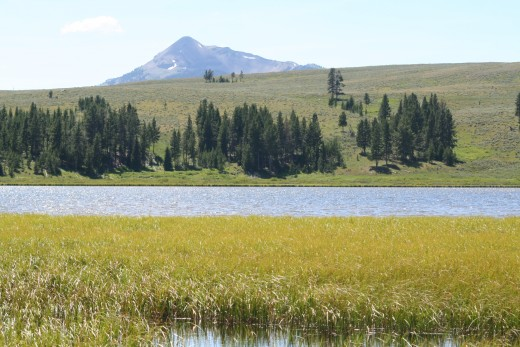 Swan Lake Landscape