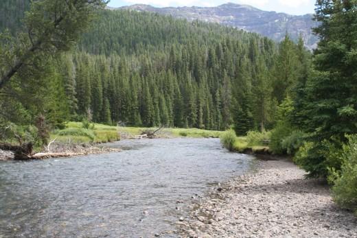 Soda Butte Creek @ Soda Butte Picnic Area