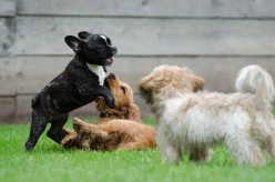 Do Dogs Benefit From Day Care And Dog Park Socialization