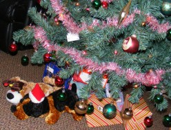Family Christmas Holiday Traditions