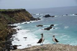 Tour To Isla De Plata