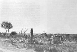 Tsavo, after elephant damage