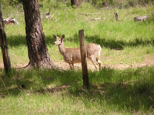 A deer located a mineral lick that provided needed nutrition