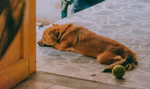 Obese dogs are less active.