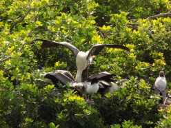 The Top 3 Nature Parks and Green Places to Visit in Chennai