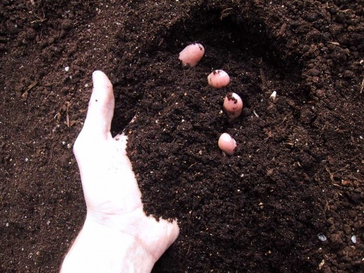 Soil is your best friend. Without good soil your plant will never exist. The soil food web restores and replenishes your plant through its life cycle and is home for your gardens diverse biome.