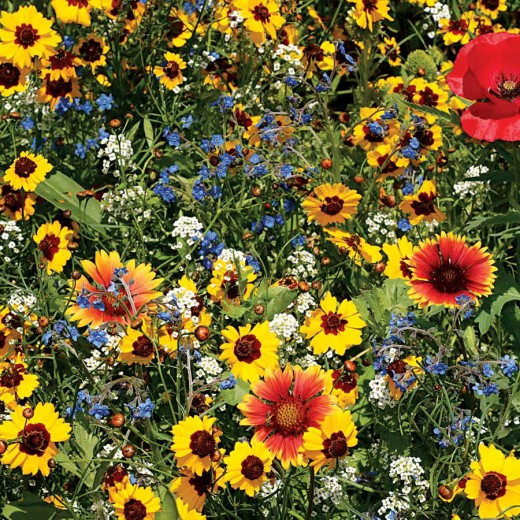 Compost also is great for your flowers! Planting wildflowers invites beneficial insects to pollinate your plants and help make your garden a magical place.