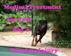 First Aid and Medical Treatment for Your Limping Dog's Damaged Cruciate Ligament