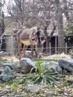 The Mockery of the Zoo Animals